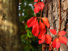 2012 12 01 Flowers MG Scarlet leaves