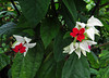2013 04 21 Flowers PFAS Red white and green