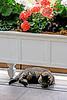 KCTrip 2009 APR Kaufman Kitty 03