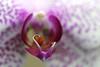 KCTrip 2009 APR Kaufman Orchids 02