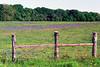 2000/03 Fenced in bluebonnets