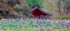 2000/03 Independence TX bluebonnet house