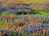 2016 04 03 GC Wildflower bumps