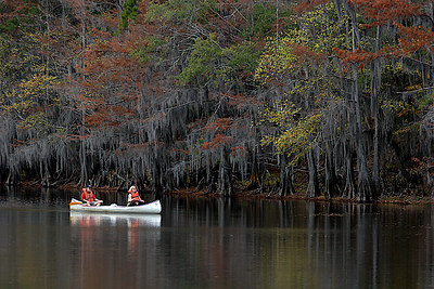 Caddo Lake is mysterious and beautiful