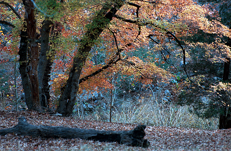 1984/11 Places Lost Maples State Park in Texas 01