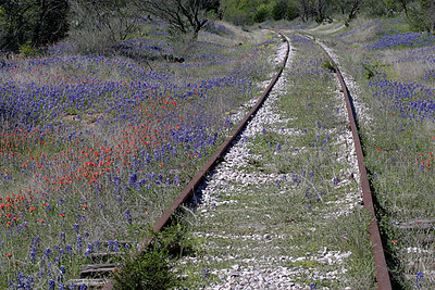 Spring 2003 was a very good season for Texas wildflowers.