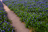 2004/04 Flowers Spring sidewalk in Flatonia