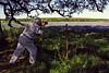 2004/04 Flowers Bluebonnet Photographer near Marble Falls