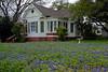 2004/03 Flowers Bluebonnets yard in Shiner