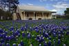 2004/04 Flowers Bluebonnet front yard