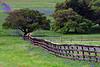 2004/04 Flowers Bluebonnet Ranch along Scenic 390 in Washington County