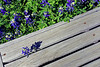 2004/03 Flowers Riding the bench