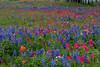 2005/03 Flowers TX Industry wildflower mix