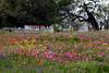 2005/03 Flowers TX Industry wildflowers