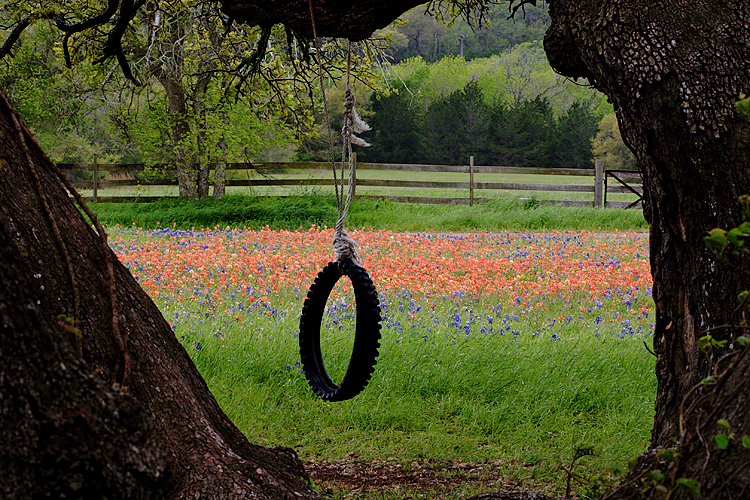2005/03 Flowers TX Tire swing in spring at Old Baylor