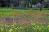 2005/03 Flowers TX Industry wildflower yard