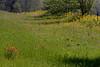 2005/03 Flowers TX Wildflower mix along US79 near Oakwood