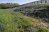 WC 2009 MAR FM1155 Fence, Rocks and Bluebonnets