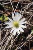 2010 02 27 017 Top view of Wind flower along Zibilski Road