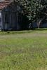 2010 02 27 013 A field of Henbit in Round Top Texas