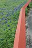 2011 03 16 Flowers Branch Crosiing road side bluebonnets