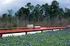 2011 03 16 Flowers Bluebonnets at the Branch Crossing bridge