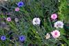 2012/02/26 Flowers along Grogans Mill median 04