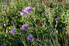 2012/02/26 Flowers along Grogans Mill median 02