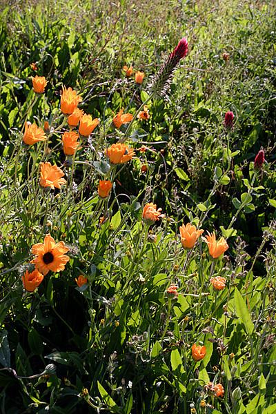 2012/02/26 Flowers along Grogans Mill median 01