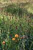 2012/02/26 Flowers along Grogans Mill median 05