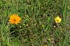 2013 03 06 Flowers TW Siblings