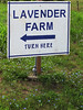 2013 06 22 Flowers Lavender farm sign and widows tears