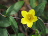 2014 03 11 TW Flowers Jasmamine blossum