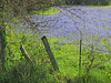 2014 03 31 Flowers Pretty field ugly fence