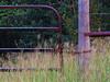 2014 10 10 WC October grasses