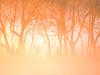 2016 01 30 TX Sunrise fog blast