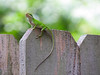 2016 07 17 59W King of the fence