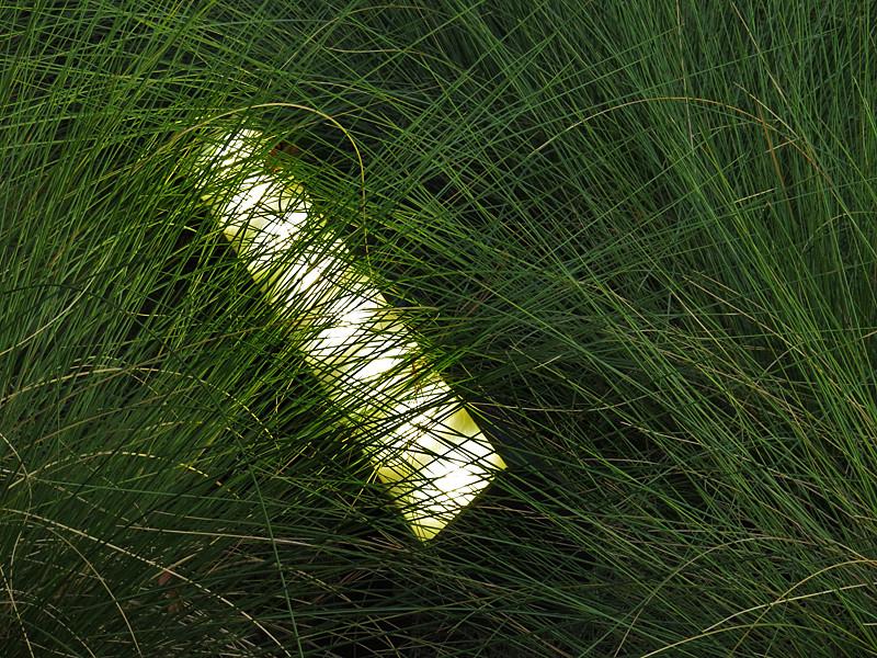 2016 07 24 TW Grasses 03 with light bar