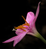 2016 07 29 59W Rain lily profile