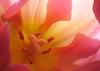 2016/01 Inside tulip