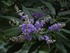 2016 05 21 59W Purple blue