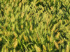 2016 07 24 TW Grasses 01
