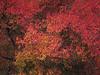 2018 10 15 KS Olathe In your face autumn colors