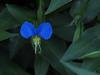 2018 09 11 KS Ogg Road Prairie Erect Day Flower