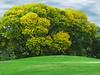 2018 10 11 KS Golf course early autumn colors