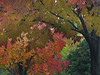 2018 10 25 KS Olathe Autumn palette