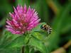 2018 10 25 KS Olathe Bee careful