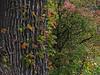 2018 10 11 KS Autumn textures