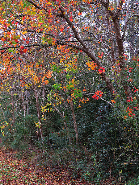 12 06 12 Places TW the last little bit of autumn