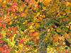 2013 12 59W Autumn mix